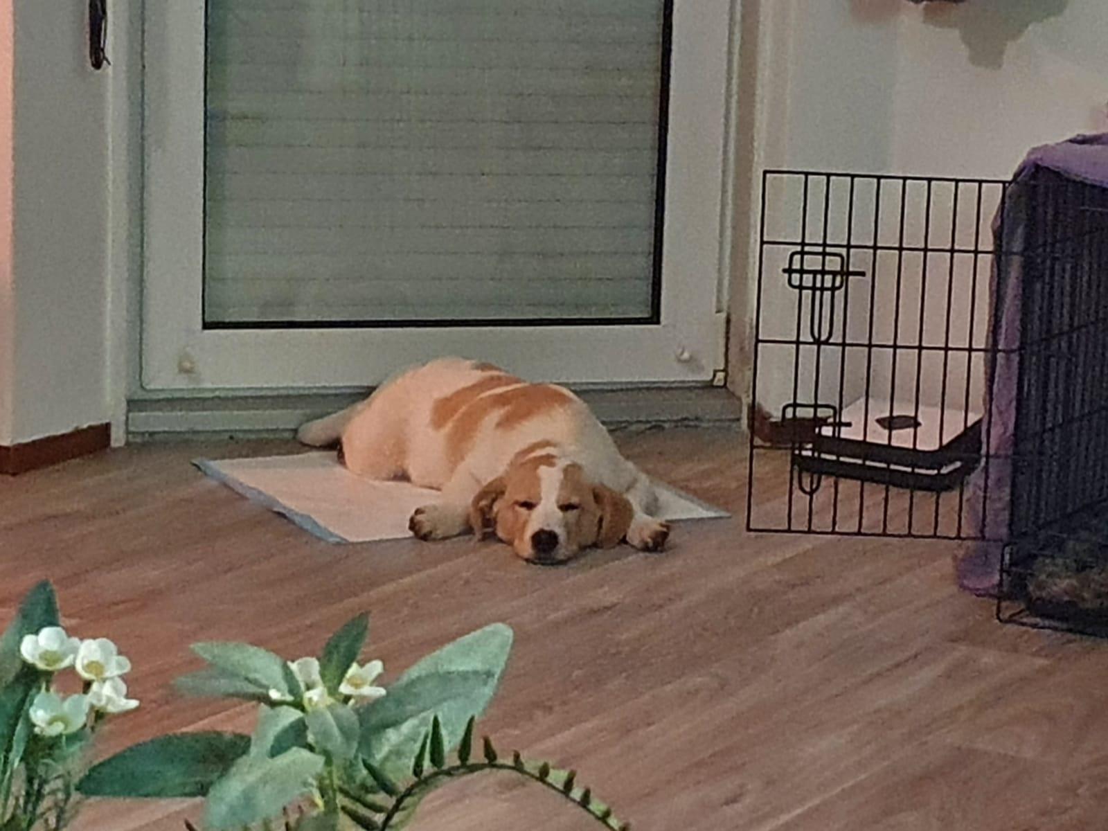 Balou - slapen bij deur