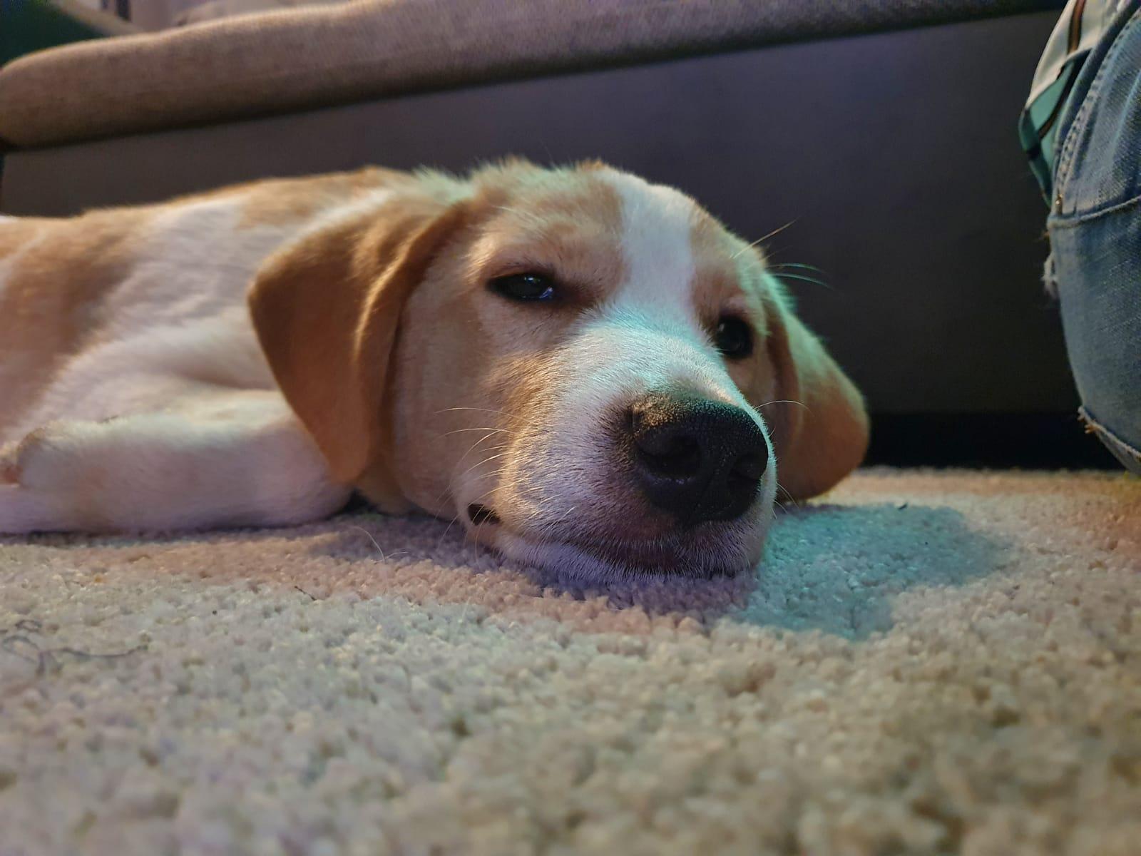 Balou - slapen